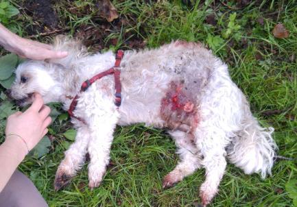 verbod op het houden van hond na dodelijk bijtincident - petities24